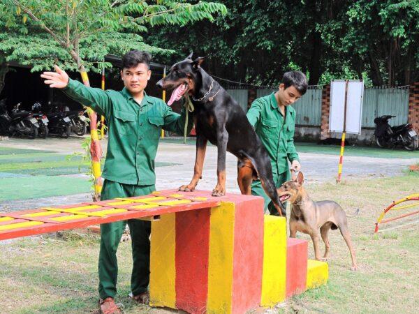 Trung tâm huấn luyện chó cảnh uy tín chuyên nghiệp nhất